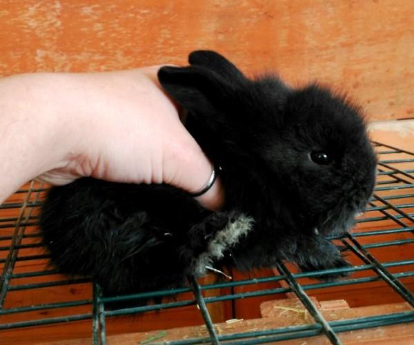 Conejo toy 0011