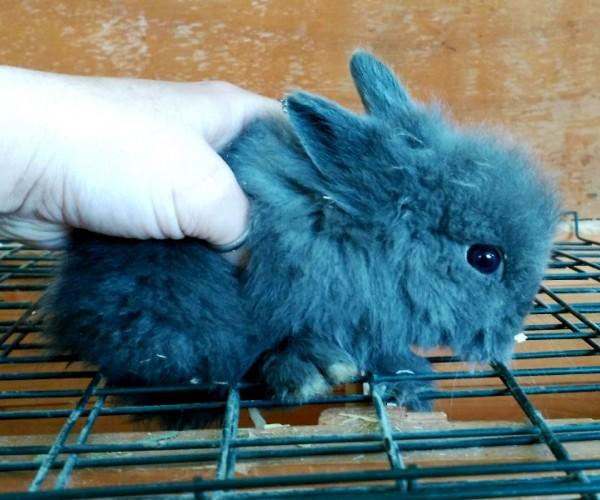 Conejo toy 0012