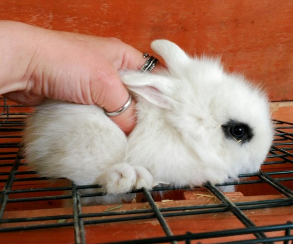 Conejo toy 0013