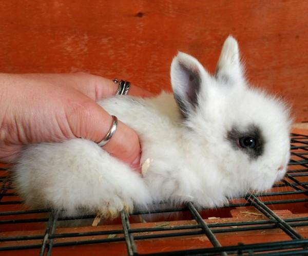 Conejo toy 0014